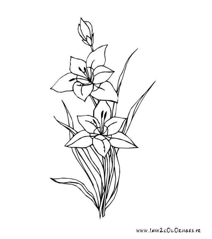 amaryllis coloring pages - photo#12