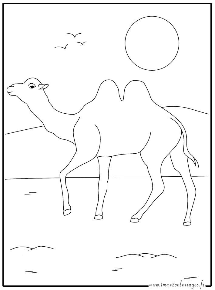 Coloriages des animaux du monde le chameau - Dessin de chameau ...