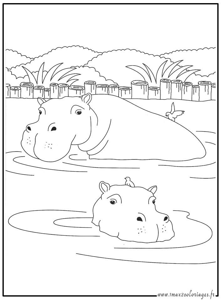 Coloriages animaux du monde l 39 hippopotame - Coloriage hippopotame ...