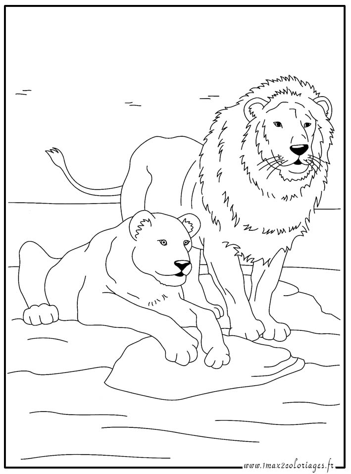 Coloriages animaux du monde le lion et la lionne - Coloriages lion ...