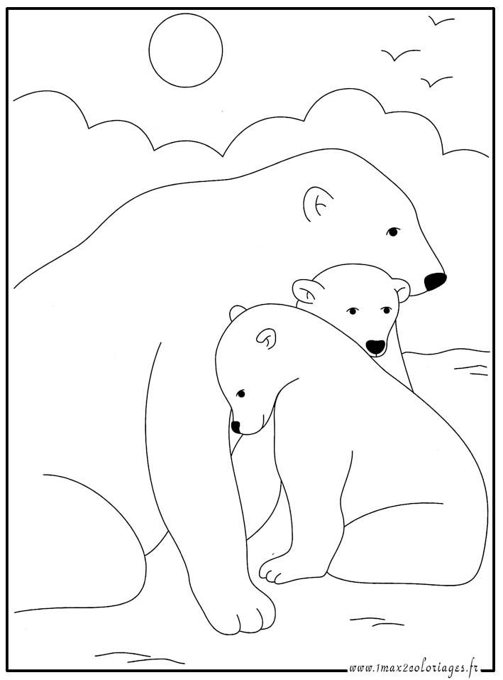 Coloriages animaux du monde l 39 ours polaire - Dessiner un ours en maternelle ...