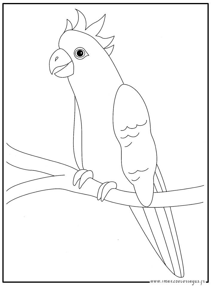 Coloriages animaux du monde le perroquet ara - Coloriage de perroquet ...