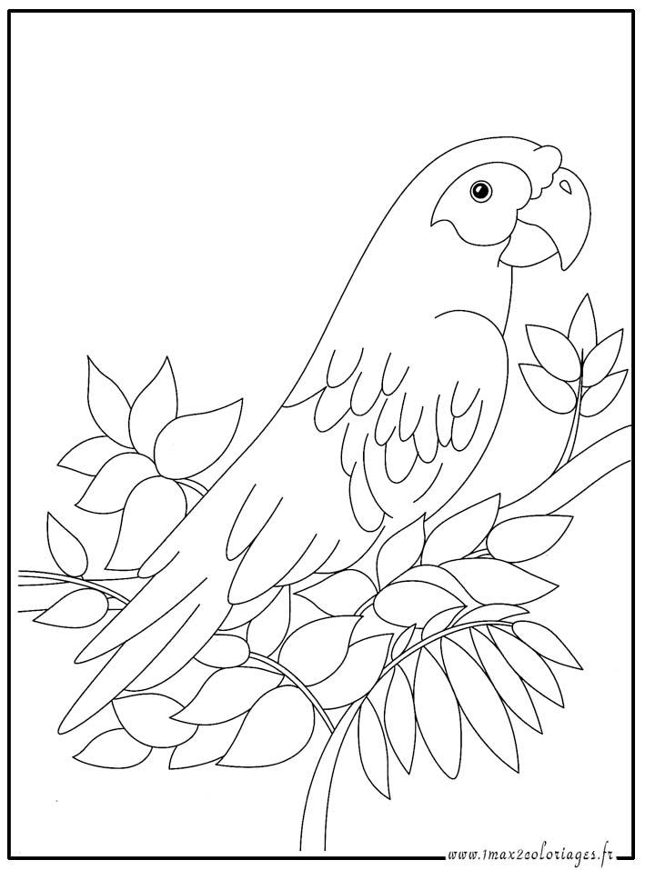 Coloriages animaux du monde le perroquet - Dessins de perroquets ...