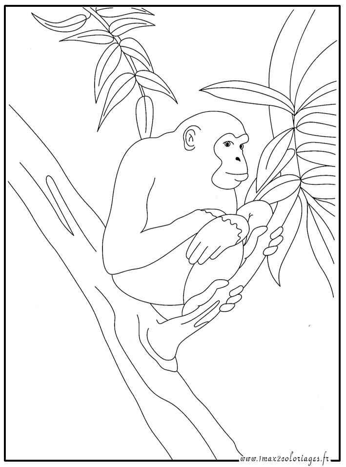 Coloriages animaux du monde le singe - Dessin de singes ...