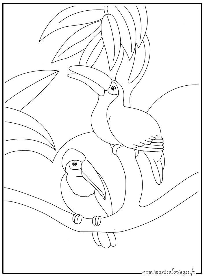 Coloriages animaux du monde les toucans - Coloriage toucan a imprimer ...