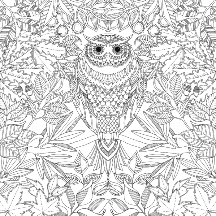 coloriage pour adulte anti stress un hibou a imprimer. Black Bedroom Furniture Sets. Home Design Ideas