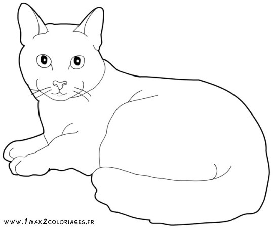 Chat dessin colorier - Coloriage de chat ...