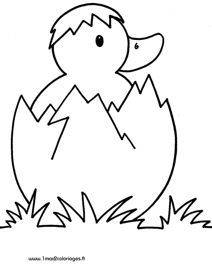 Coloriages pour les 3 4 ans petit canard sortant de sa coquille a imprimer - Coloriage 3 ans a imprimer gratuit ...