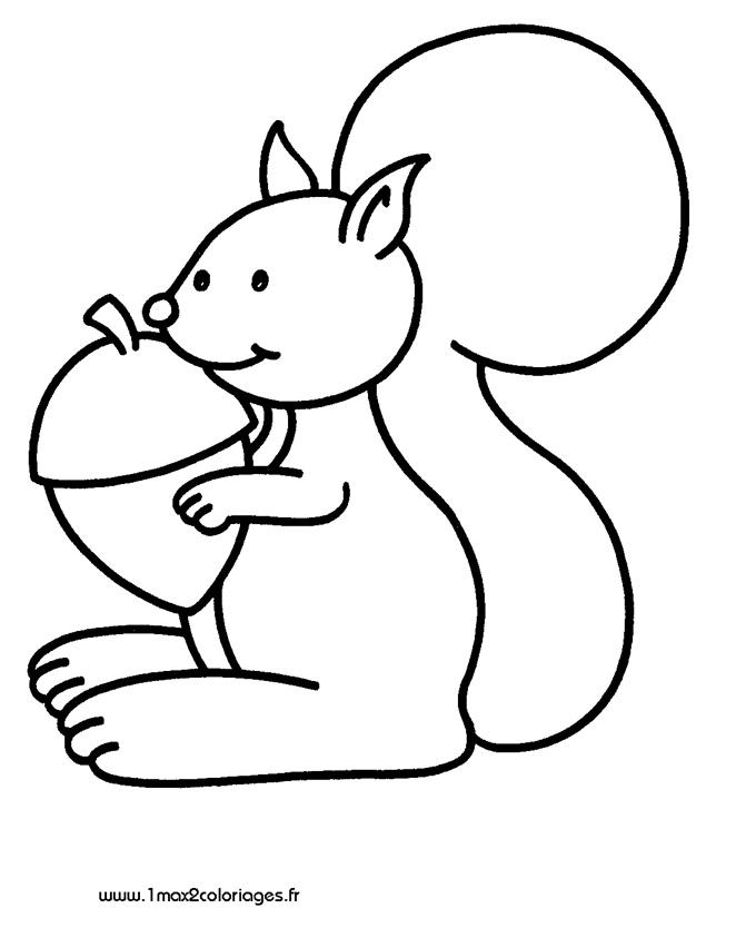 Dessiner un ecureuil - Coloriage d ecureuil ...
