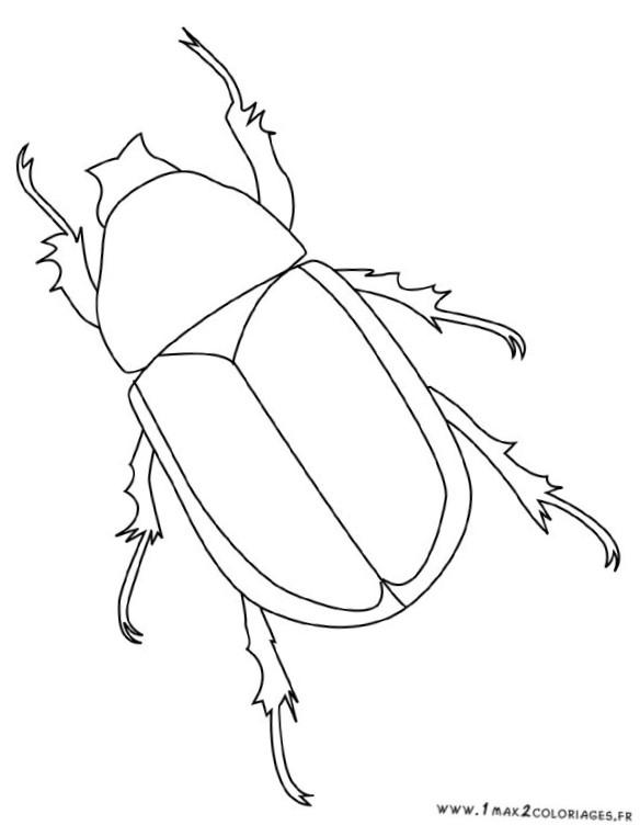 Dessin insecte - Dessin d insectes a imprimer ...