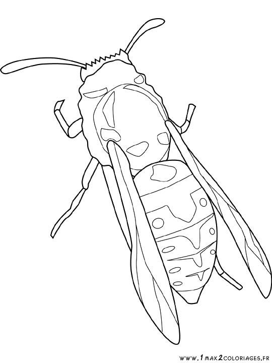 Dessin insecte - Coloriage insecte ...