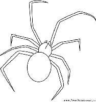 Amusez-vous à colorier ces insectes, Attention certains ...