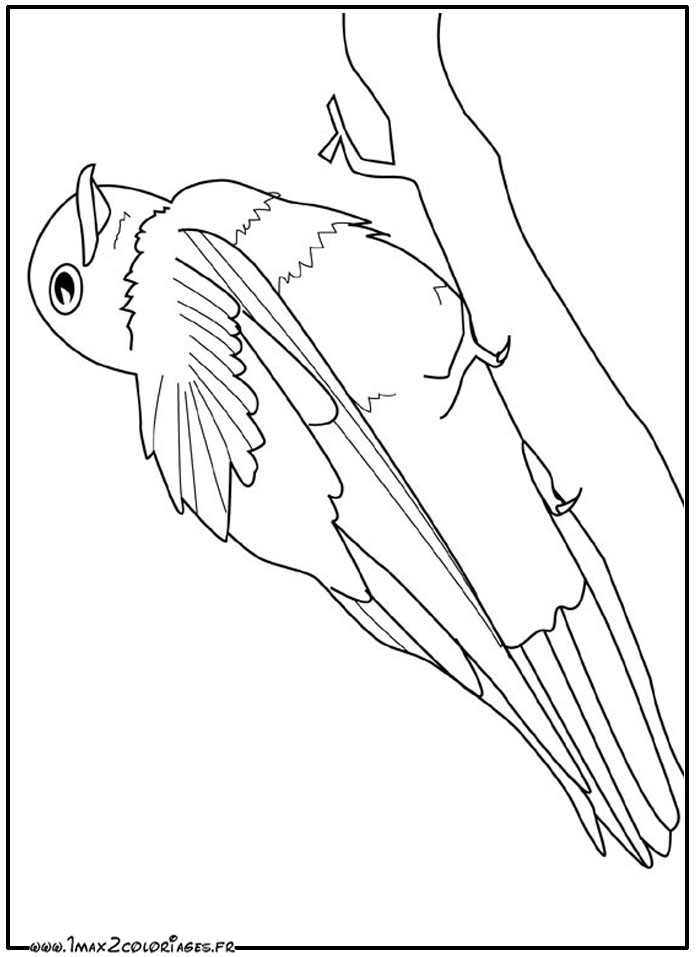 Coloriage d oiseaux a imprimer - Tfou coloriage ...