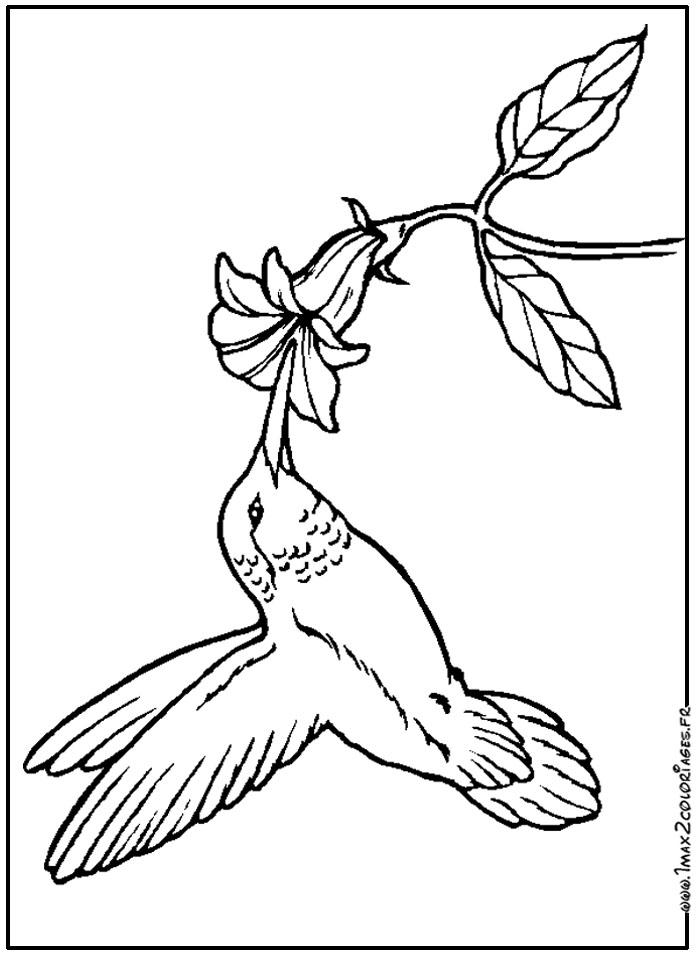 Coloriages d 39 oiseaux oiseau mouche - Oiseau mouche dessin ...