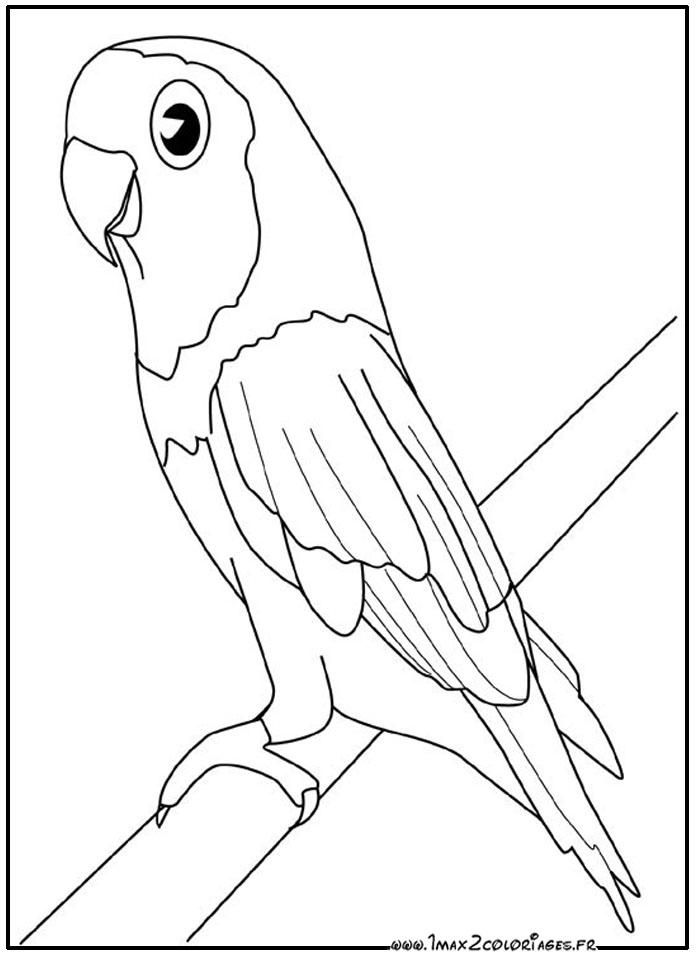 Coloriage de perroquets imprimer de coloriages enfants pictures to pin on pinterest - Dessin calopsitte ...