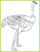 Coloriage d 39 oiseaux du monde entier - Autruche dessin ...