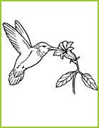 Coloriage d 39 oiseaux du monde entier - Oiseau mouche dessin ...